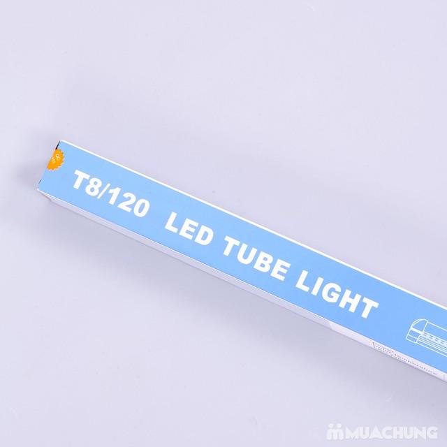Mẫu in hộp giấy đựng bóng đèn đẹp